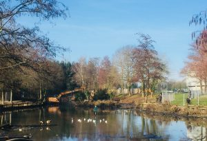 Woodford Park lake improvements February 2019