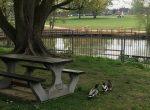 paddling pool ducks Woodford park Woodley