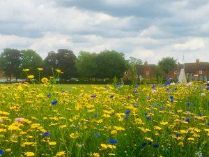 Woodford park Woodley