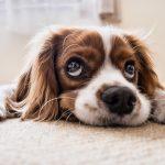 Canine award RSPCA Wokingham borough